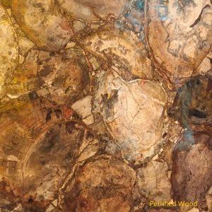 Material Petrified Wood (2)
